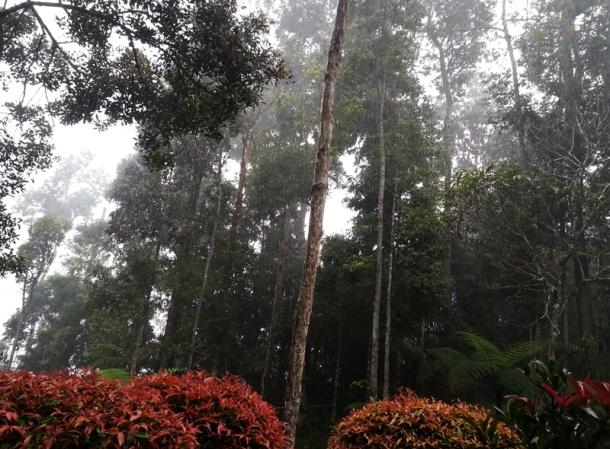 Bukit Tinggi Pahang